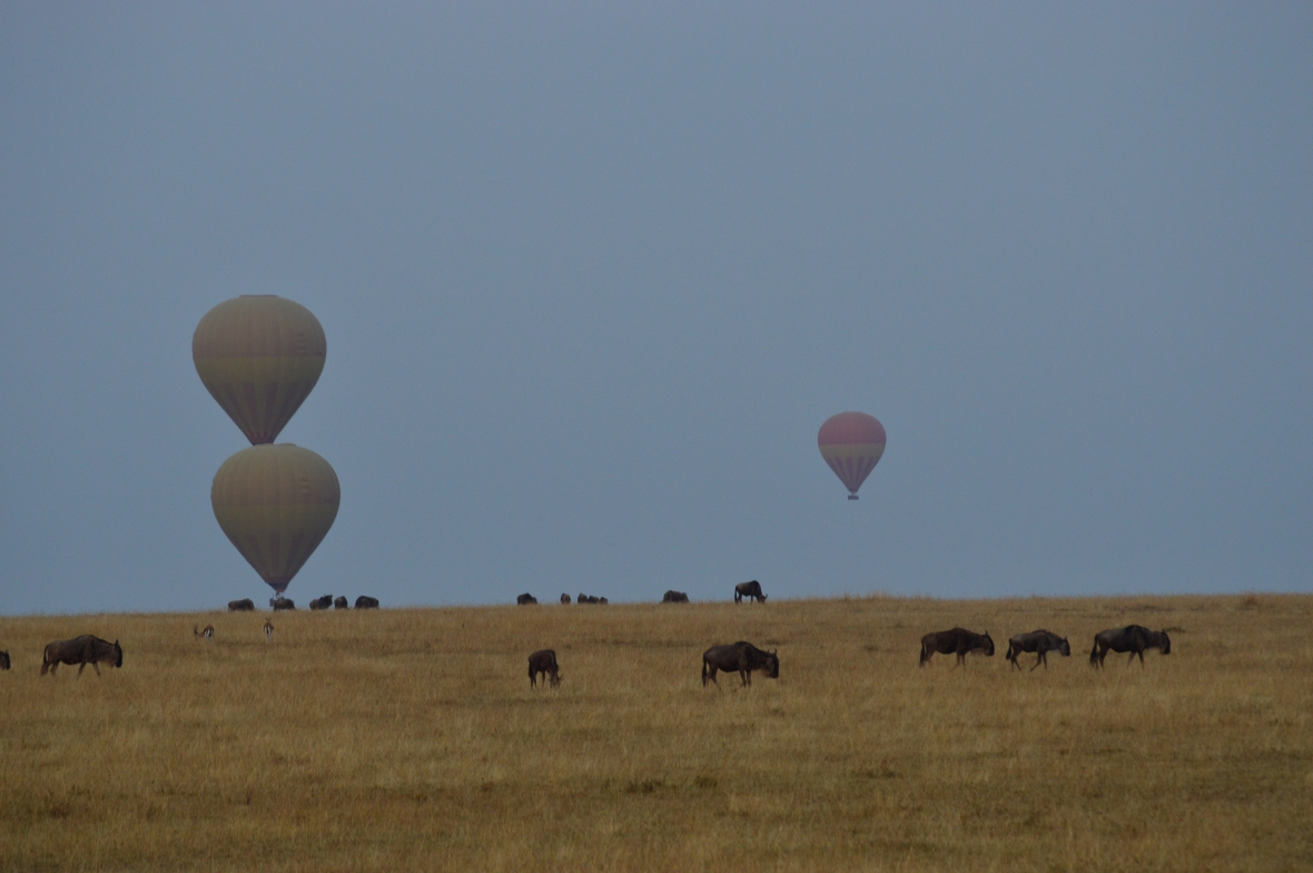 3 hot air balloons above a herd of wildebeests in Masai Mara National Reserve, Kenya