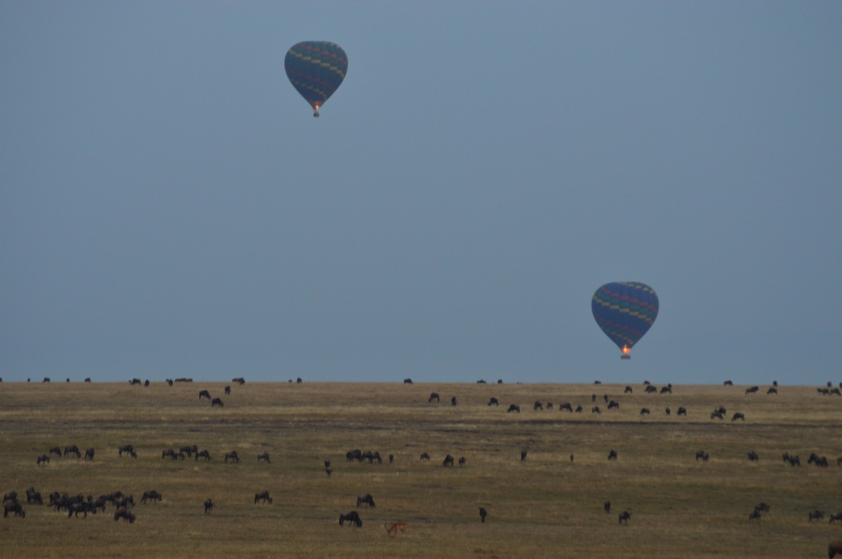 2 hot air balloons firing above wildebeests in Masai Mara National Reserve, Kenya