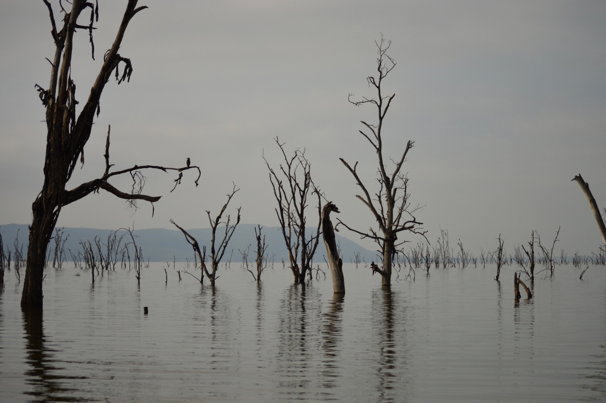A flooded forest in Lake Nakuru National Park, Kenya