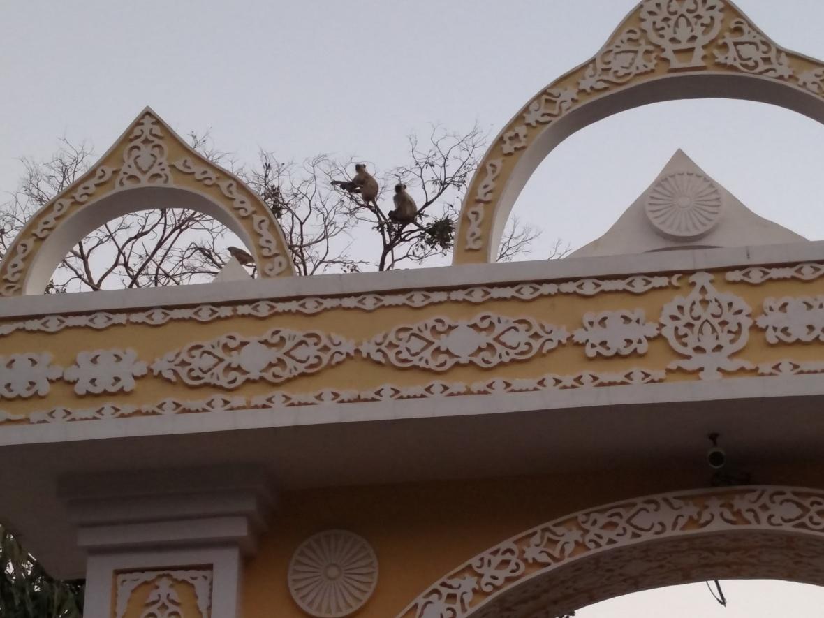 Dhamma Thali, Jaipur - monkey tree