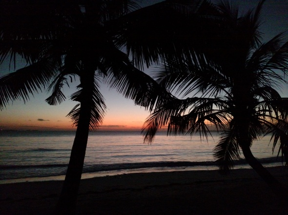 Silhouette of palm trees during sunset from Dar es Salaam