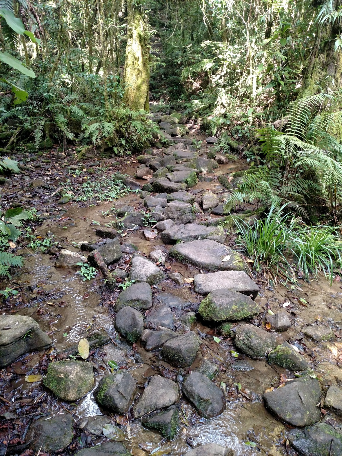 Rock path across a stream bed in Ranomafana National Park, Madagascar